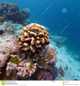 Colorful Coral Reef Landscape