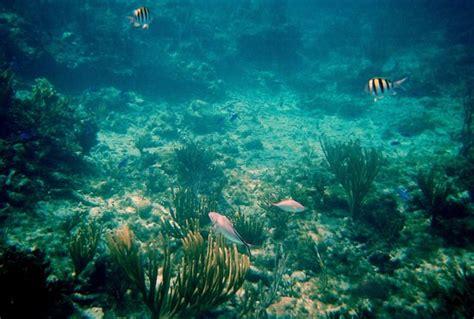 pat diane snorkeling freeport bahamas address phone