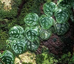 Rainforest plants, tropical rainforest plants - Funny Pictures