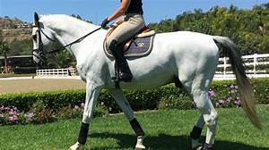 Troubleshooting  Getting Your Horse In Front Of Your Leg