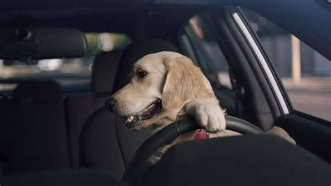 Subaru Ascent Brings Back The Barkleys Dog Family