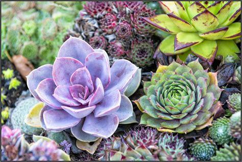 The Succulent Store - Granton (South) - Blooming Tasmania :: Tasmania is my Garden