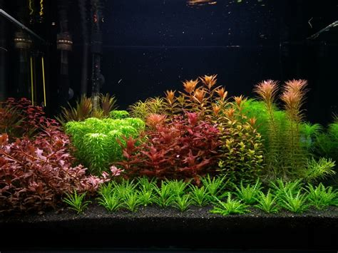 Planted Tank Red And Green By Adrian Nicolae