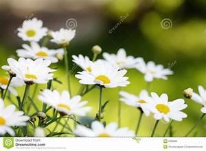 Blumen Im Sommer : sommer blumen stockbild bild von blurry garten flora 2082689 ~ Whattoseeinmadrid.com Haus und Dekorationen