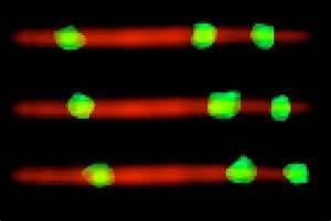 Proteins In Vitro