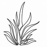 Grass Coloring Plants Growing Outline Clipart Colouring Lemon Thrives Template Sheet Clip Lawn Sketch Templates Sky sketch template