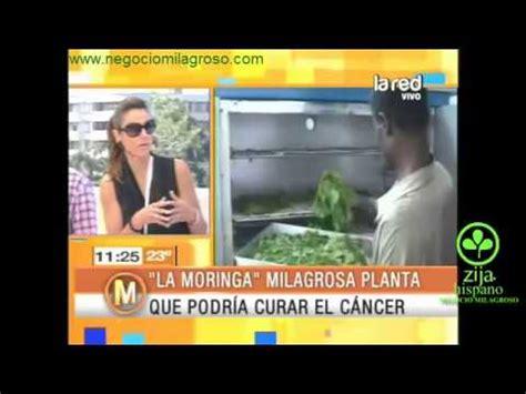 kalanchoe rojisa cura cancer la tenemos en canc doovi