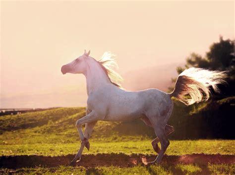 gambar kuda poni lari kawin kuda nil kartun kuda kuda laut