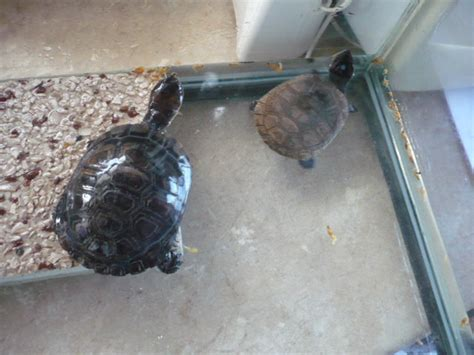 aquarium sale tortue d eau douce forum la tortue facile