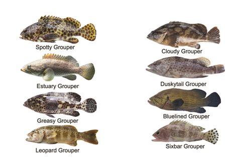 fresh grouper january catching tips