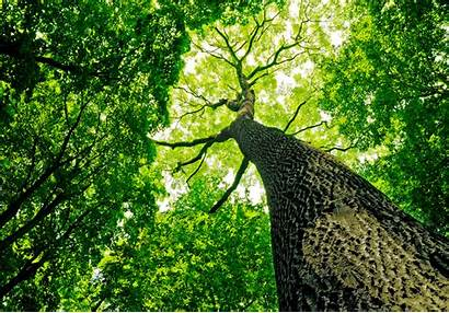 Dioxide Carbon Trees Absorb Earth Much Longer