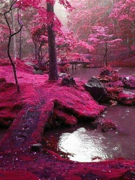 "foto de The famous ""Rosa Moss Bridges"" Ireland Beautiful places"