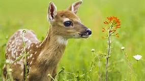 Résultat d'images pour photo d'animaux