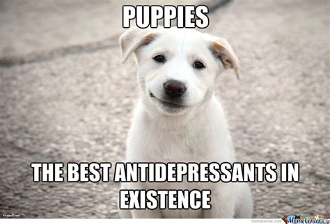 Puppy Memes - puppies by likeaboss meme center
