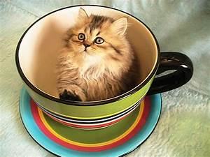 Kitten In A Cup Pictures, Photos, and Images for Facebook ...