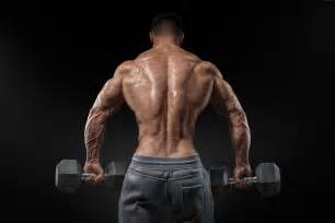 Bodybuilding Back Muscles