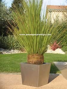 Grand Pot Plante : oliviers prestige vente oliviers grand choix toutes formes ~ Premium-room.com Idées de Décoration