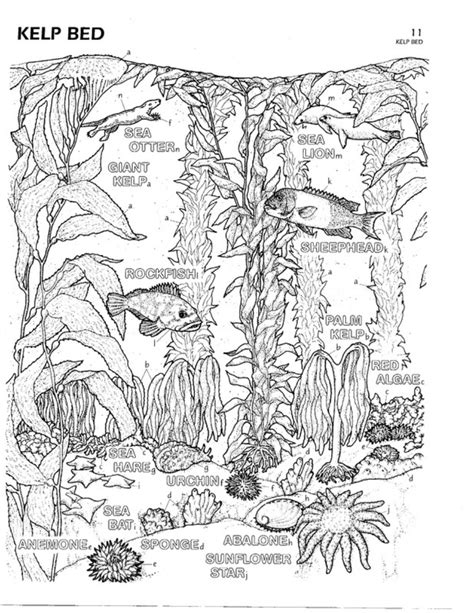biology coloring book 5 best images of biology coloring printables spongebob