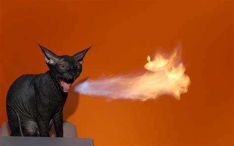 hd cat spitting fire wallpaper