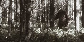 Man opens fire in national park 'because he thought he saw Bigfoot'…