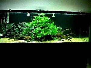 Aquascaping  Moenkhausia Costae In A 6 Ft  Freshwater