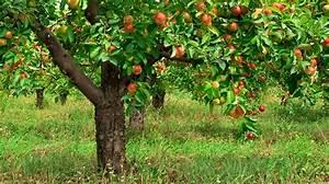 Wat Groeit Er Onder Fruitbomen   U2013 De Tuin Op Tafel