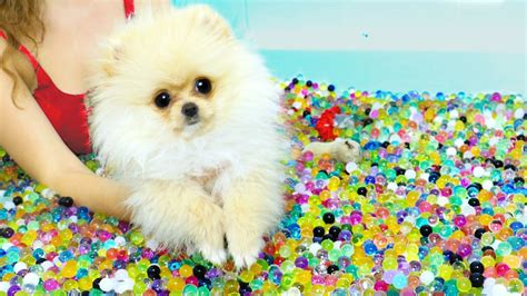 Puppies VS Orbeez Challenge! | Julia Gilman | FunnyDog.TV