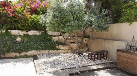 mediterranen garten anlegen diese pflanzen machen