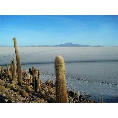 File:Isla Del Pescado Salar De Uyuni Bolivia