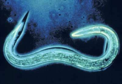 Beneficial Nematodes for Grubs and Soil-Dwelling Pests ...