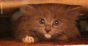 Katzen Fernhalten Von Möbeln : warum versteckt sich meine katze katzen lieben feliway ~ Sanjose-hotels-ca.com Haus und Dekorationen