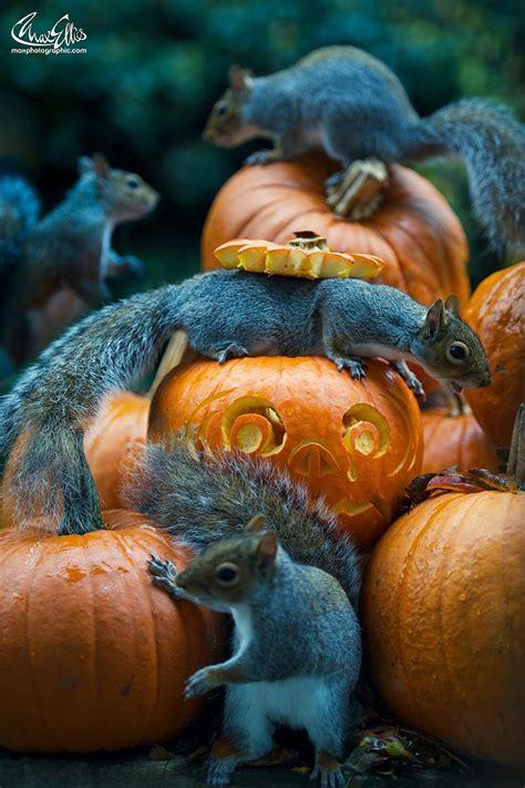 squirrel   halloween monster     steal