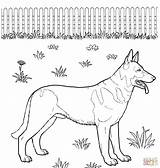 German Coloring Shepherd Colorare Pastor Cani Disegni Puppy Colorear Perros Dogs Printable Dog Disegnare Kleurplaten Kolorowanki Cane Aleman Immagini Pastore sketch template