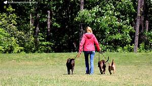 Out and about pet services professional dog walking and for Professional dog walking service