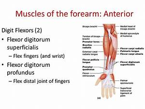 Muscles that Move the Forearm & Hand - ppt video online ...