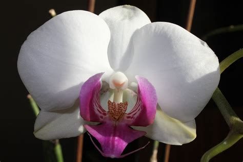 comment s occuper d une orchid 233 e en pot