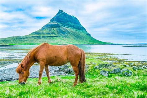 vitamin  deficiency  horses equine nutrition solved