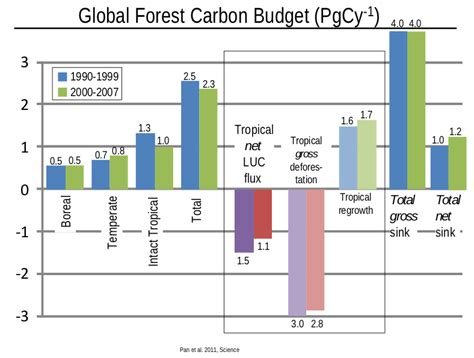 define carbon sink forest forests play a major as carbon sink say scientists