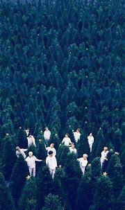 Seventeen Wallpaper: Whole Group | Carat 캐럿 Amino ...