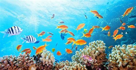 Marine Conservation Mirpuri Foundation