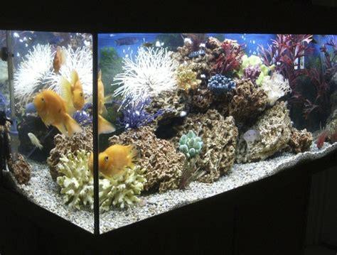 heure eclairage aquarium quel 233 clairage pour l aquarium