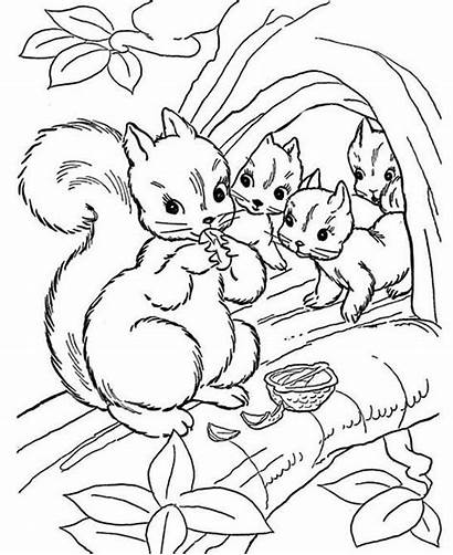 Coloring Children Squirrel Printable Tree Colouring Nut