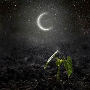 Calendrier Lunaire Potager : calendrier lunaire jardinage et potager ~ Melissatoandfro.com Idées de Décoration
