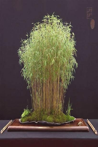 Bonsai Trend20us Tree Lun