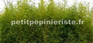 Haie Naturelle Brise Vue : haie de bambou ~ Premium-room.com Idées de Décoration