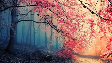 Nature, Trees, Colorful, Simple Background Wallpapers Hd