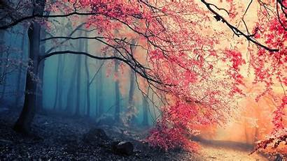 Simple Nature Colorful Trees Backgrounds Desktop Wallpapers