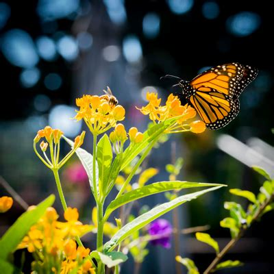 85876 Westminster Butterfly Pavilion Coupon by 5 Admission Day At Butterfly Pavilion In Westminster