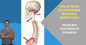 Mal Di Testa Digestivo  Cervicale E Nervo Vago  Problemi
