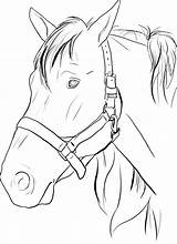 Horse Head Coloring Printable Pages Getcoloringpages sketch template